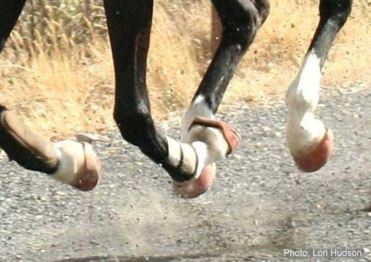 Renegade(R) Hoof Boots