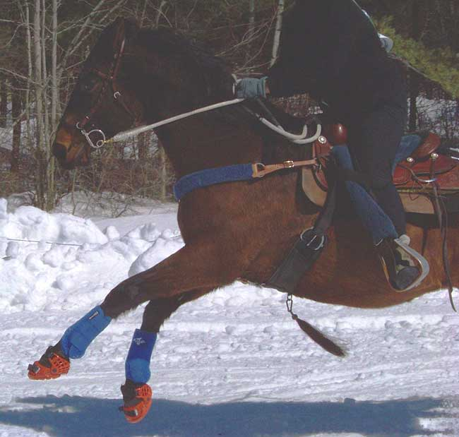 Renegade Race Fuel >> Renegade® Hoof Boots News Page